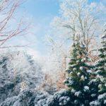 Hoe bepaal ik wat ik mijn loyale klanten geef voor Kerst?